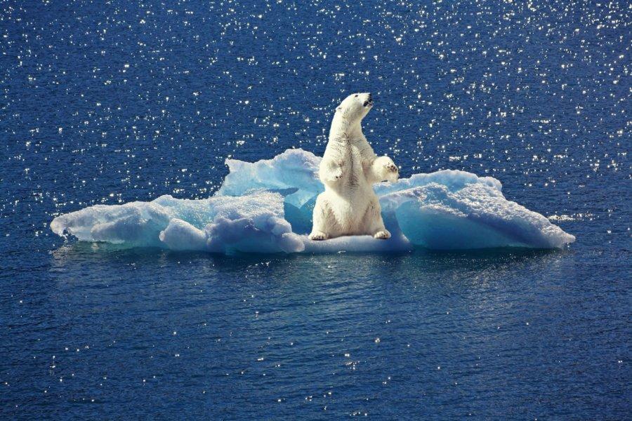 polar-bear-2199534